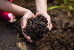 Close-up of woman holding soil in garden on a sunny day